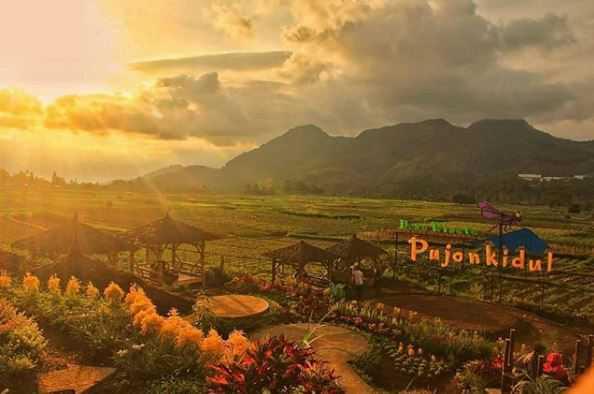 Cafe Sawah Pujon Kidul Tempat Makan Asyik Dengan View Indah